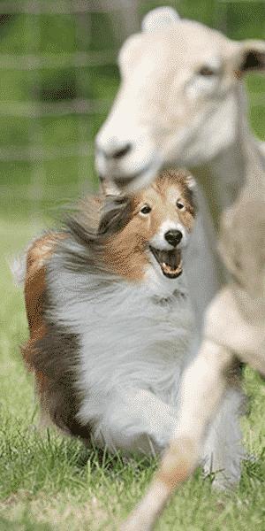 herding_group