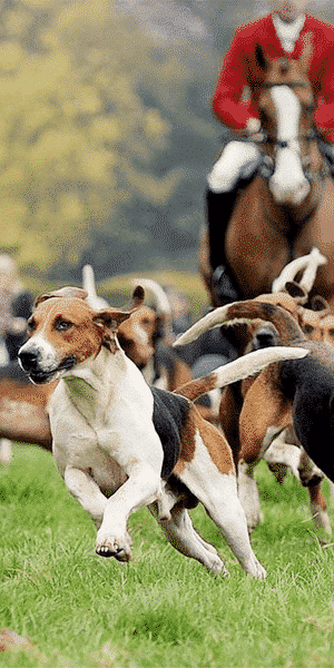 hound_group3