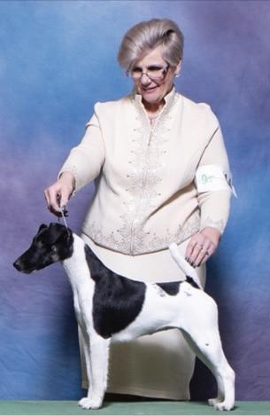 Lisa Leady | Smooth Fox Terrier