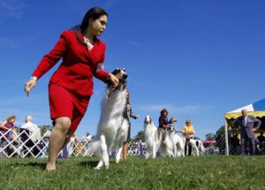 Owner-Handler Contribution to the Legacy of Purebred Dogs