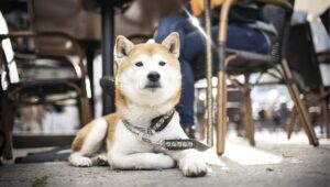 Dog Behavior | Temperament, Personality and Soundness