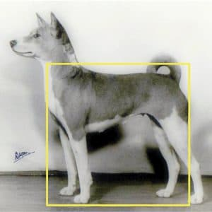 Proportionally Speaking: The Square Basenji