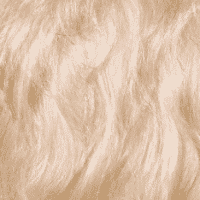 Soft Coated Wheaten Terrier Coat and Color