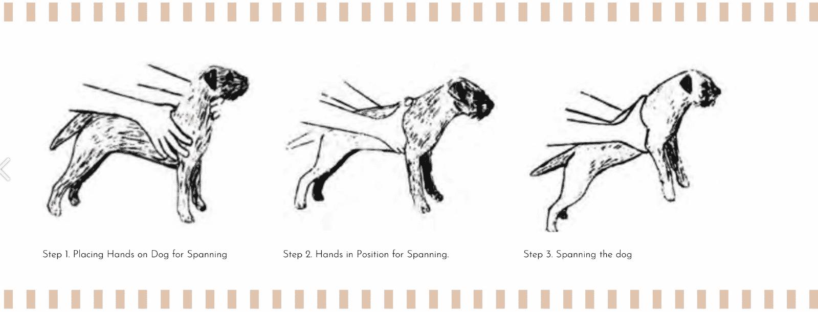 Spanning The Border Terrier