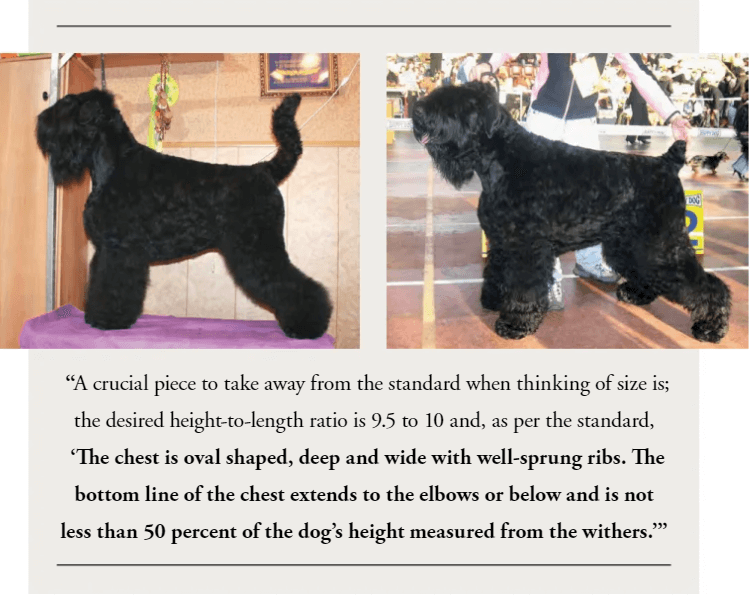 Size and Coat Type of Black Russian Terrier ?