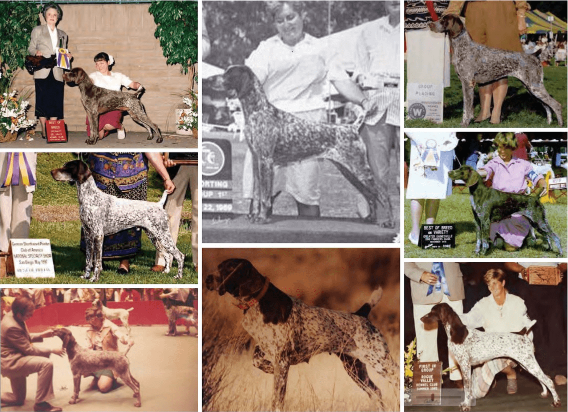 The Hallmarks of the German Shorthaired Pointer