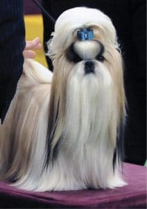 Do Purebred Dogs Have an Image Problem?