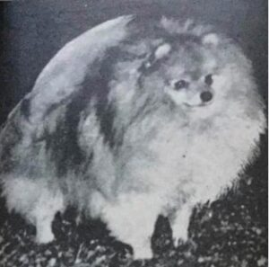 Studying the Pomeranians Past