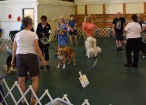McKinley Kennel Club