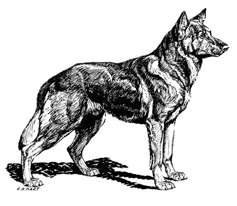 Type in the breed German Shepherd Dog & Pembroke Welsh Corgi