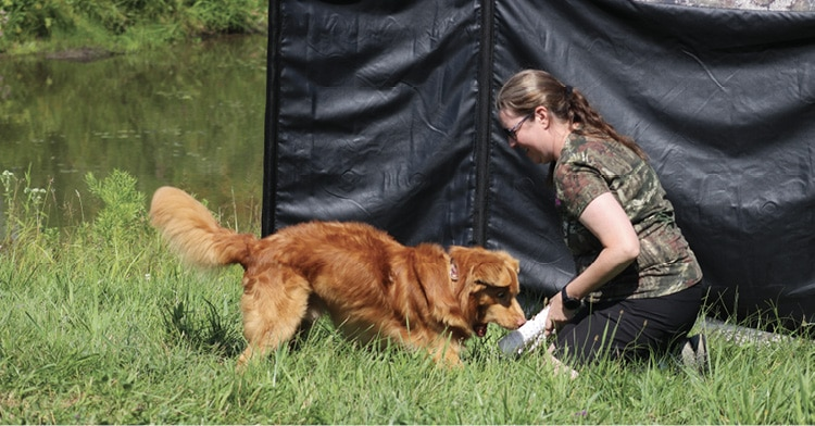 Nova Scotia Duck Tolling Retriever and Owner Playing