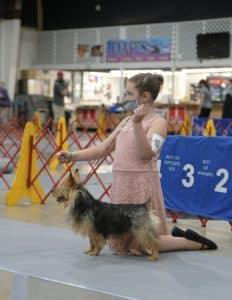 Shenandoah Valley Kennel Club |  Skyline Kennel Club