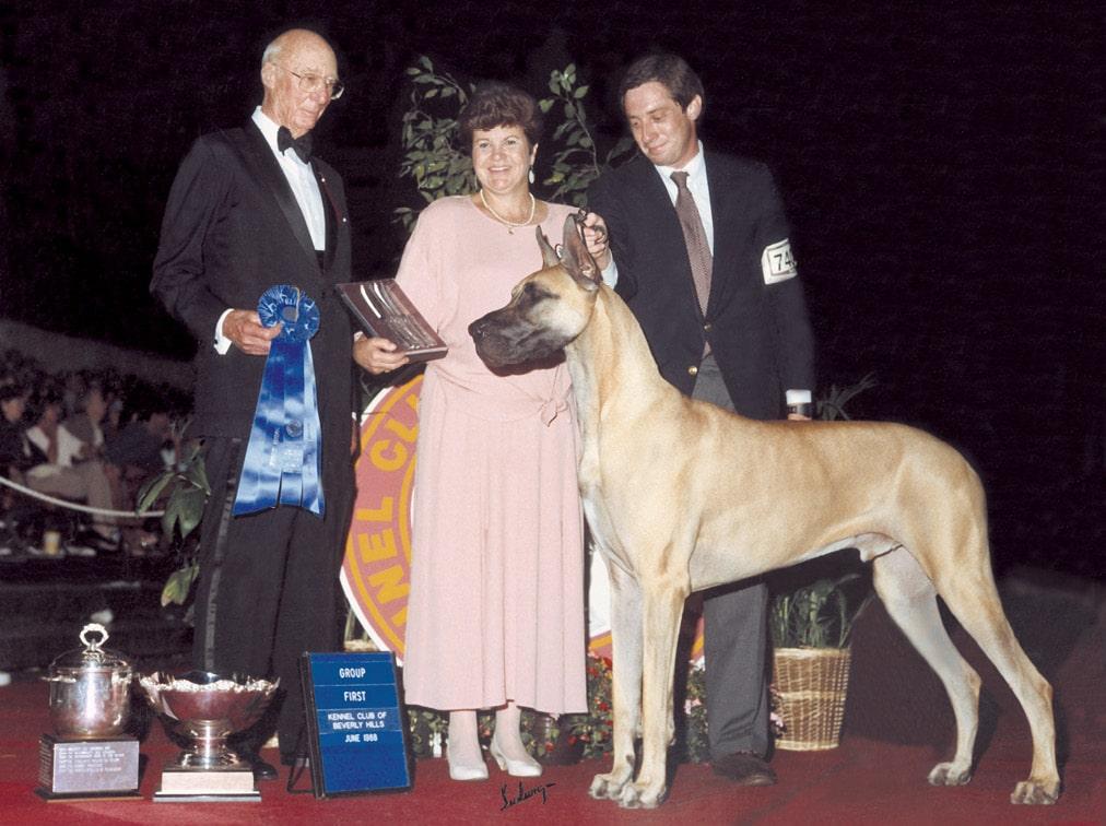 Dog Show Great Dane Breed Eric Ringle