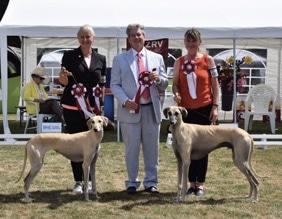 The Sighthound Survey Image Of Dog Owner