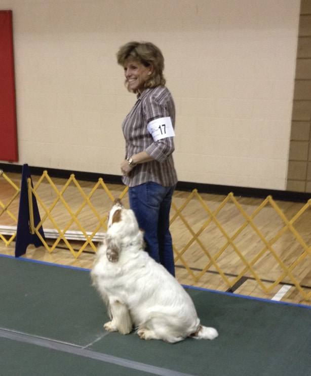 The Best Hunting Companion | Clumber Spaniel
