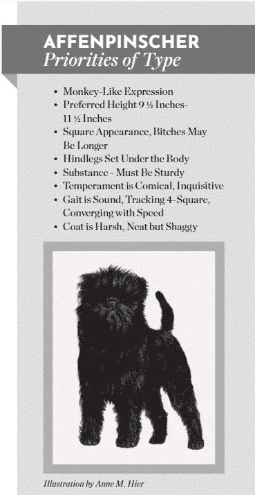 Preserving Affenpinscher Breed Type