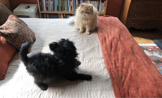 Dog and a cat on a bed