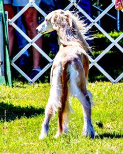 Cascade Hound Association