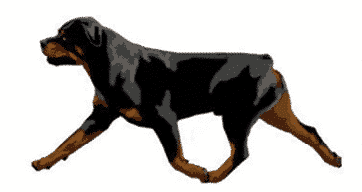 Judging Rottweilers   Breed Type & Movement