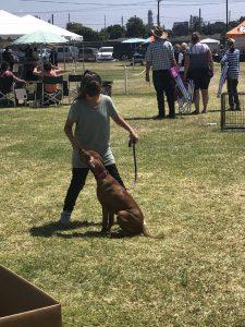 South Bay Kennel Club