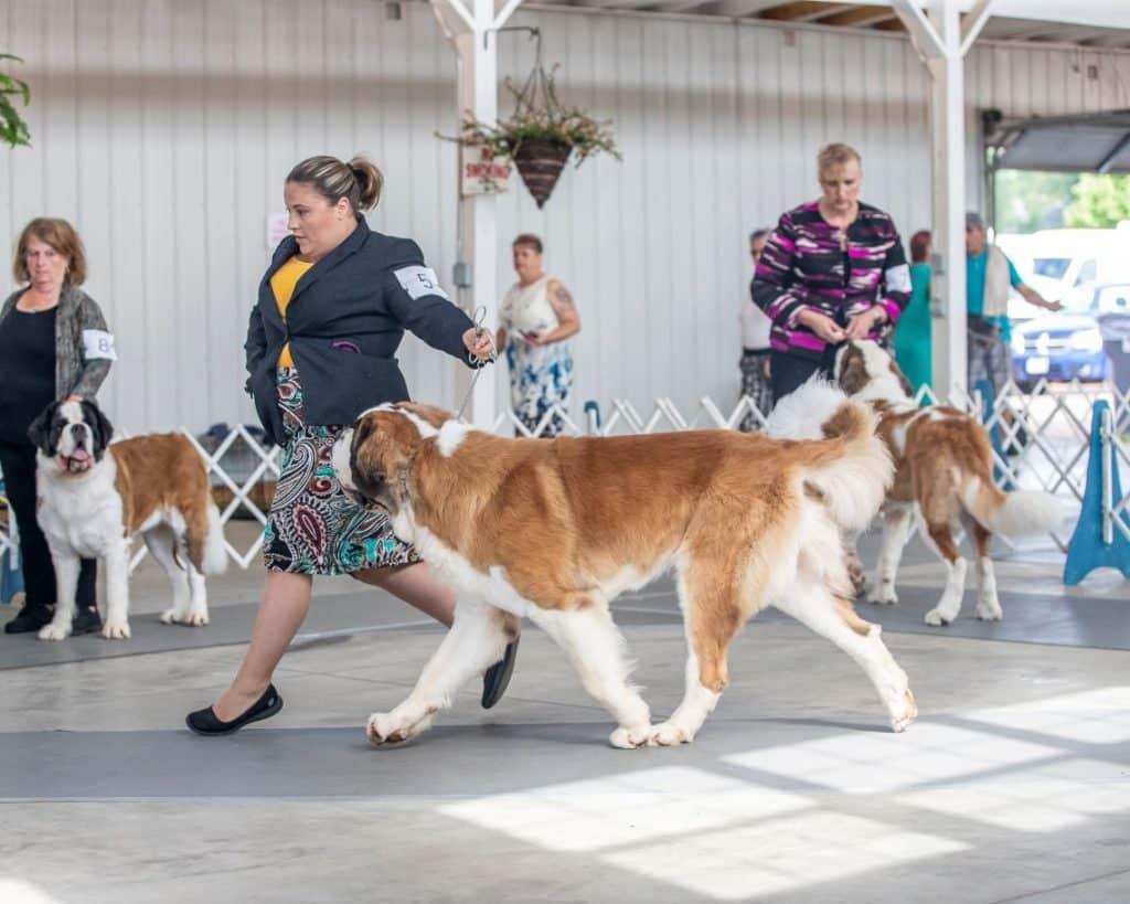 Marshfield Area Kennel Club