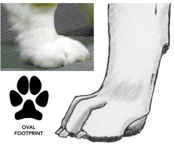 No Foot, No Dog