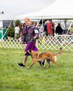 Paper Cities Kennel Club