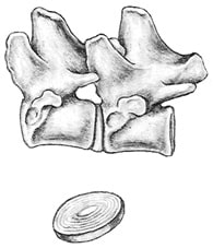 A Closer Look at the Canine Spine