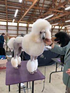 Rockford-Freeport Illinois Kennel Club