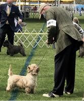 The Terrier Judges   Ken Kauffman